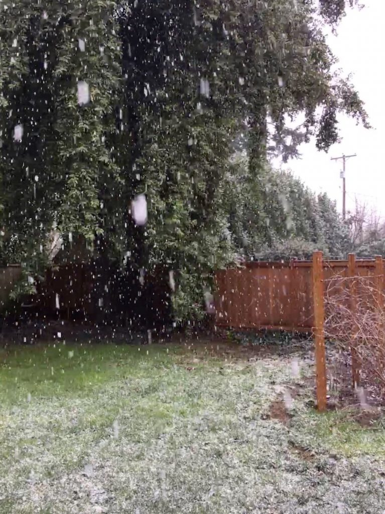 Snow falling in a backyard with temperatures above freezing.